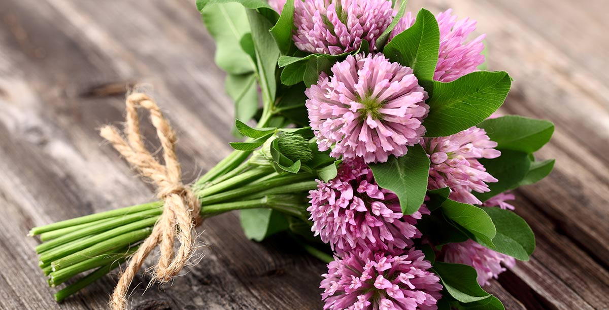 Bunch of flowers with pink petals held together by a string of jute